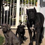 Adiestramiento canino avanzado