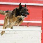 Deporte canino